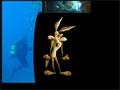 Coyote Plongeur - Photos voyages plongée
